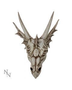 The Last Dragon Skull Realistic Reptile Skeleton Head Skulls